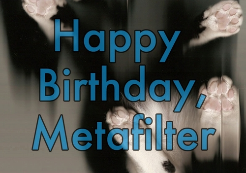 Yorvit the cat, celebrating Metafilter's birthday in the traditional fashion