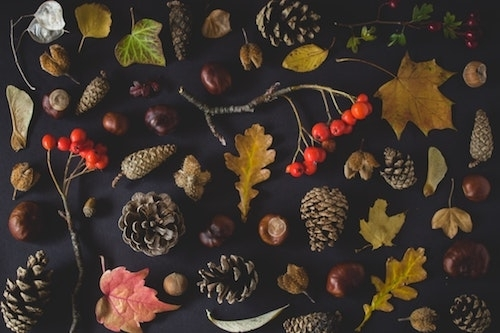 Autumn leaves flowers berries branches and pinecones