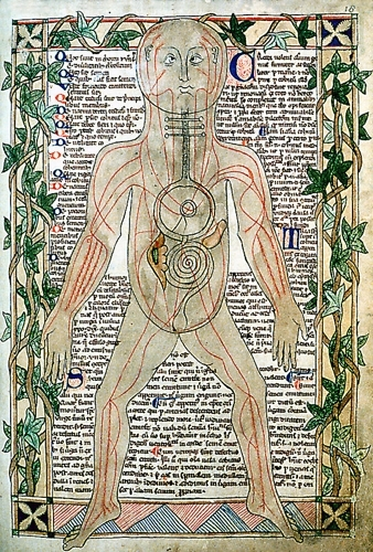13th century anatomical illustration