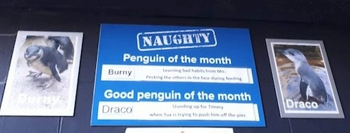 Penguins at NANZ image