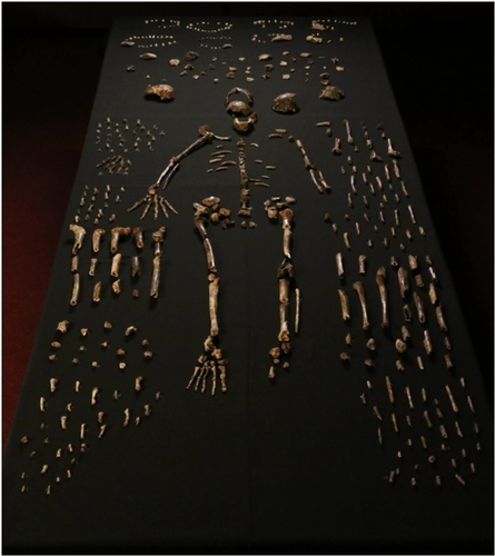 Homo naledi skeletal specimens from the Dinaledi Chamber, South Africa