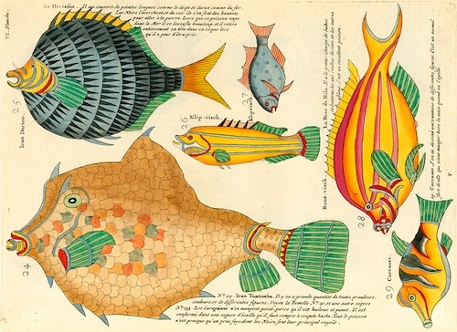bright and colorful Louis Renard illustrations of fish